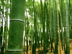 Bamboo Fabric - What's All the Buzz about Bamboo Fabric?