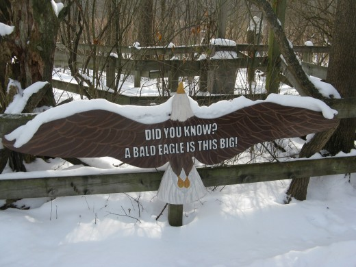 Bald Eagle Exhibit at Binder Park Zoo