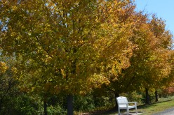Gallery of Benches in Gardens - Relaxing in a Garden or Park