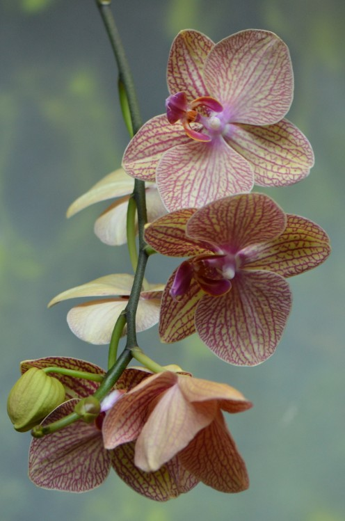 "Photo 1 - I love this ""spray"" of orchids and colors are so beautiful to me.  Don't forget to click on the images to see them larger if you like."