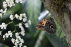 Owl Butterflies and Orchids - A Neat Event at a Butterfly Conservatory