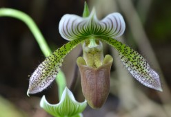 Orchids - A Brief History, Photos and Information