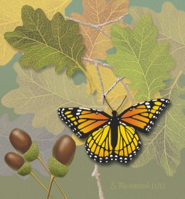 Monarch Butterfly - Painted in PhotoShop by the author