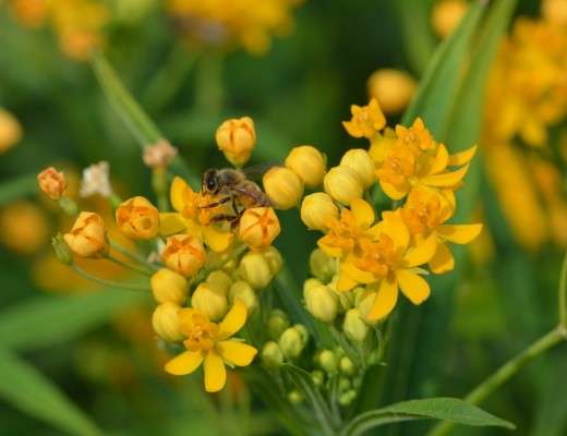 Photo 9 - Yellow flowers with bee