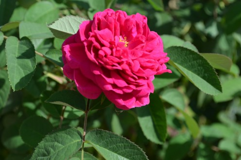 Photo 4 - One of the many beautiful flowers in the Ottoman Garden