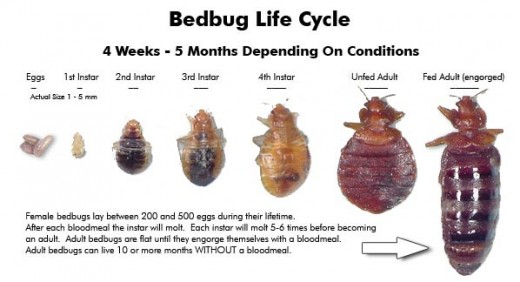 How do you get rid of bed bug bites ?