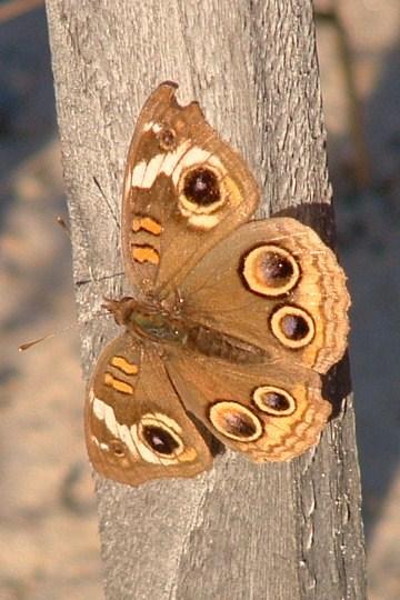 Illustration for Haiku Poem: Butterfly on Fence.