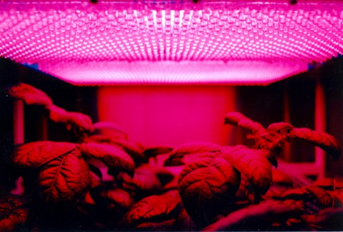 Public Domain Image of LED Grow lights from Nasa.