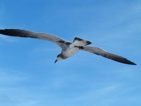 Illustration for Haiku Poem: Migrating Heaven.