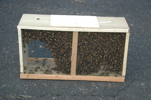 A three pound package. The queen is in a separate cage inside of the cluster of bees.