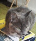 My Cat Bessie is an indoor cat