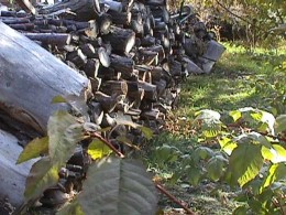 The green first appears around my woodpile.