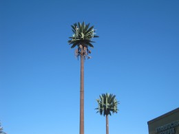 "Cell phone towers ""disguised"" to look like palm trees!"