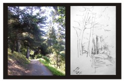 How to sketch trees and landscapes on location: an illustrated guide