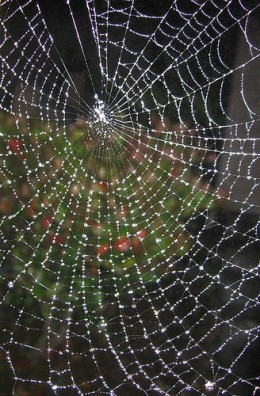 Spider Web from Marcelo Tourne Source: flickr.com