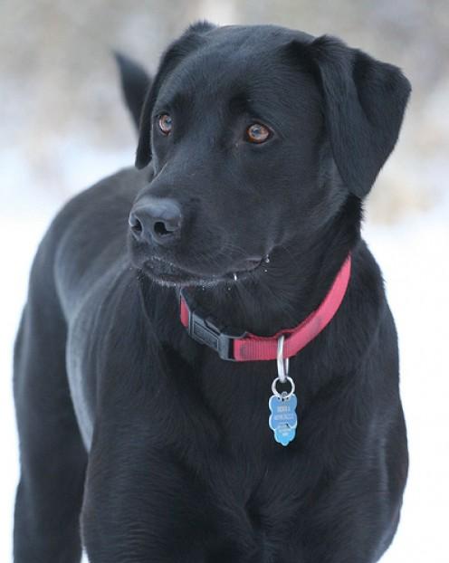 Adopt a Black Dog