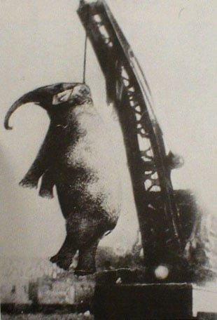 Mary, the circus elephant was hanged
