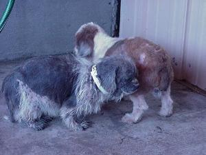 Typical puppy mill conditions.