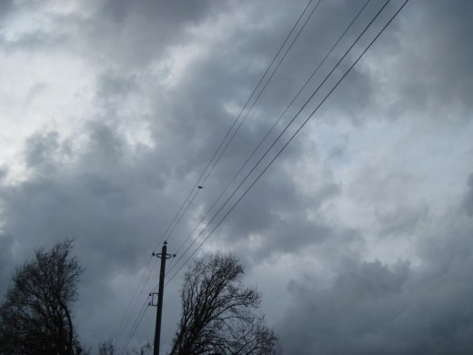 Bird perched on high wire awaits the coming storm