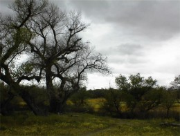 Lawrence Moore Park in Paso Robles during a break between storms.