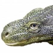 backwaterreptiles profile image
