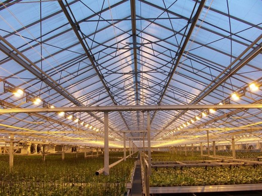 Green house. Growing vegetables in a greenhouse during the winter can have worse environmental consequences than meat.