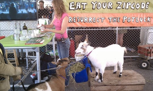 """A goat cheese making demonstration proclaims """"Eat your zipcode. Be a localvore."""