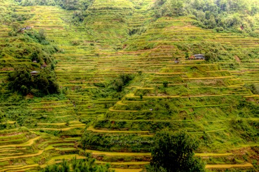 rice terraces looking like pyramids with steps