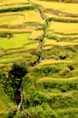 Canals form the irrigation system of the rice terraces. Observe also the steps alongside the canals. Please click on the photo for a bigger view