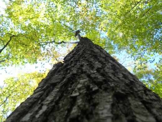 Summer tree. ©2011 Sarah Haworth.