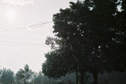 Raining Forest. ©2010 Sarah Haworth.