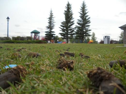 Park Landscape. ©2011 Sarah Haworth.