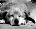 Dogsbodies - a short funny story about dog-sitting teenagers - by Johnny Parker