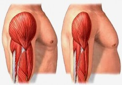 Muscle Loss with Age - If you Don't Use it You Will Lose It!