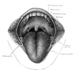 Taste receptors only process 4 types of tastes.