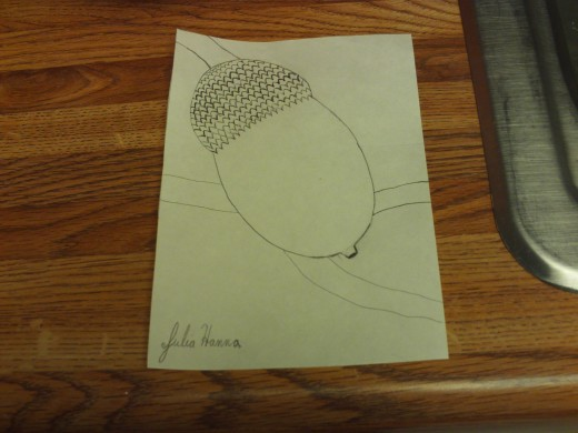 Here I have finished drawing the acorn and attached it to a tree branch.