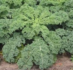 Any good recipes out there for kale?