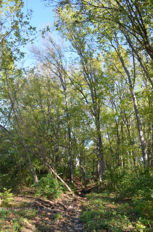 Photo 2 - Some times water flows through here, down toward a creek that leads to a river, etc.  The trees love to grow along here.