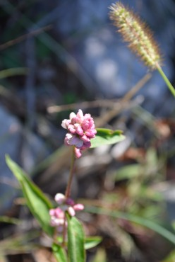 Photo 5 - We took pictures of all the flowers we could, including these little pink ones.