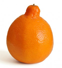 MINNEOLA, a type of TANGELO