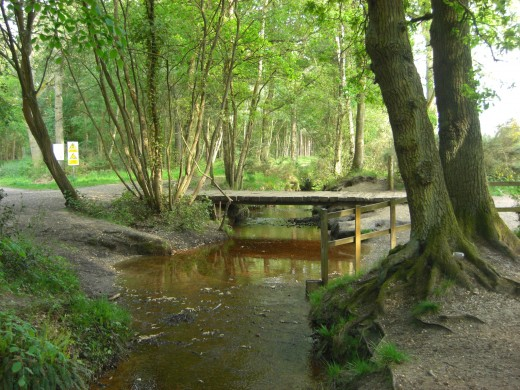 The Gelvert, one of the feeder streams for Fleet Pond.