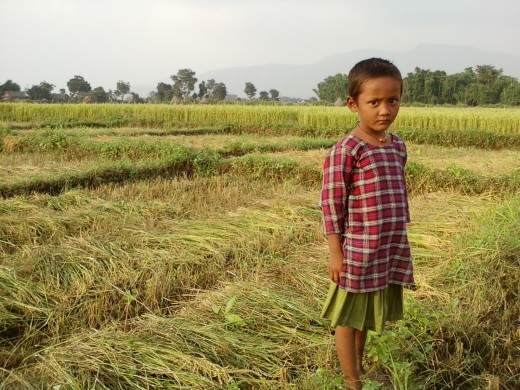 The girl was cutting paddy stalks, however when she spotted me setting my camera, she stood to give a beautiful pose.