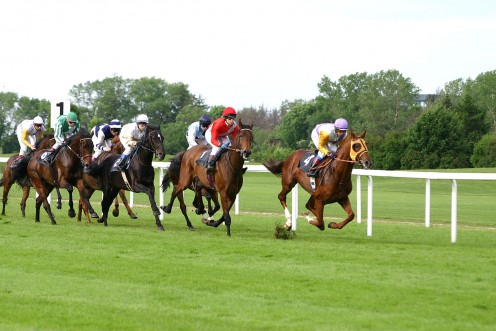 image by Softeis at Galopp Reim, Munich Germany