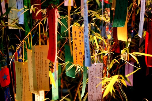 Tanzaku during Tanabata