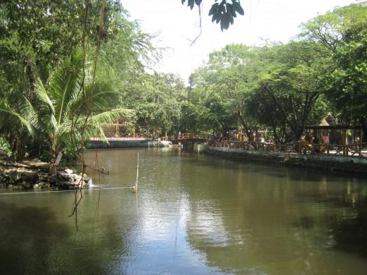 Nilad trees abound the banks of Manila Zoo man-made lake