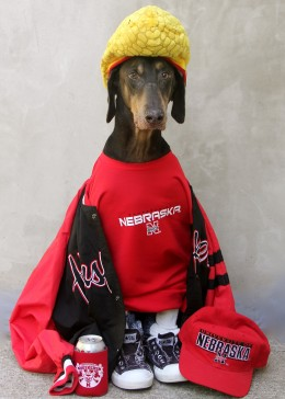 How this California dog became a Cornhusker fan will always be a mystery. Go Big Red!