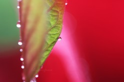 Complementary Colors - Red and Green: A Photo Gallery