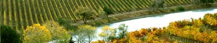 the beautiful Quintessa Vineyards