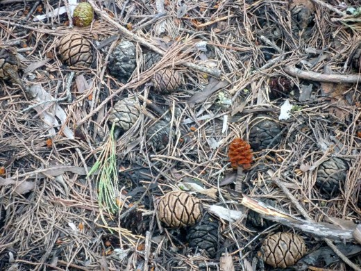 Sequoia National Park Forest Floor