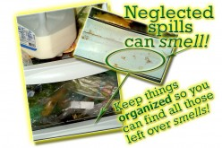 How to Clean My Refrigerator Without Chemicals